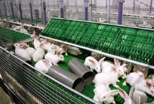 Groenewoud konijnenstal