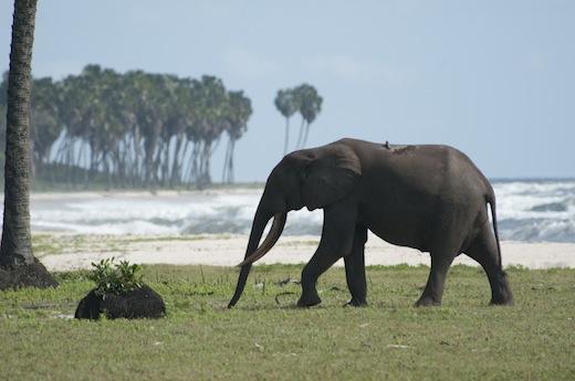 AFRICA Episode 3: Congo