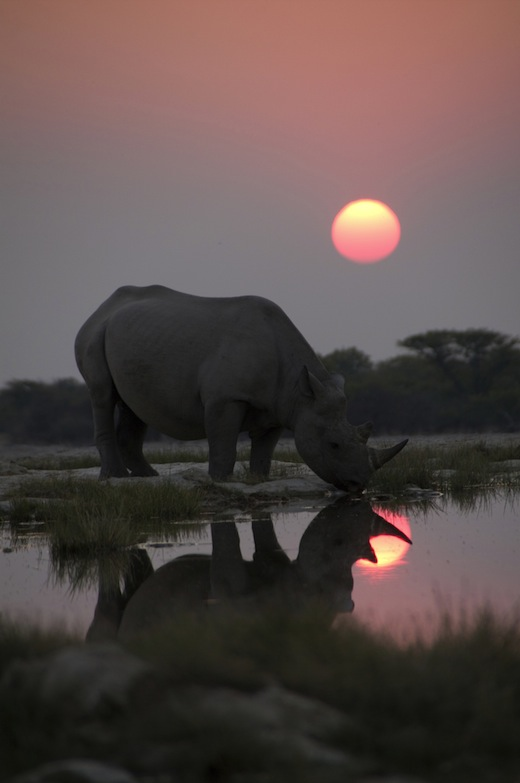 AFRICA Episode One: Kalahari