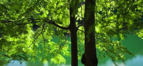 Wereld Natuur Fonds, Eindelijk wet tegen illegaal hout