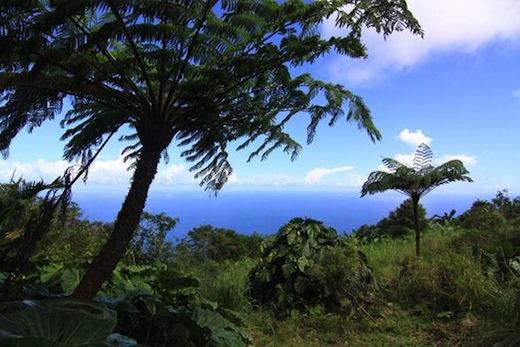 Natuur op Saba