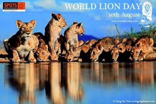 World Lion Day 2013