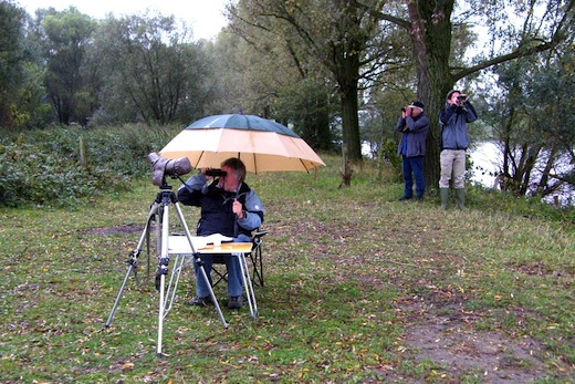 Euro Birdwatch 2012, JohnRoemen, Limburg