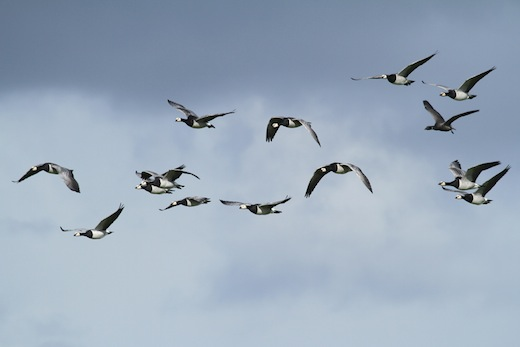 Euro Birdwatch 2012, Schiermonnikoog