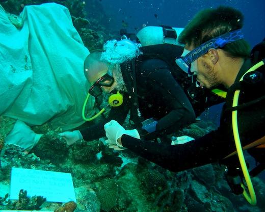 Onderzoek-aan-koraal-fotograaf-Benjamin-Mller
