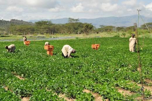 Landbouw in Afrika