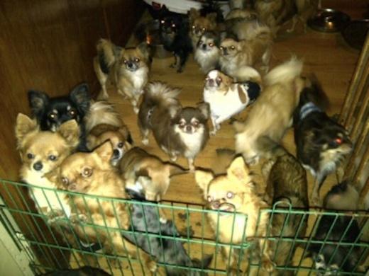 Dierenpolitie ontdekt 144 honden in woning