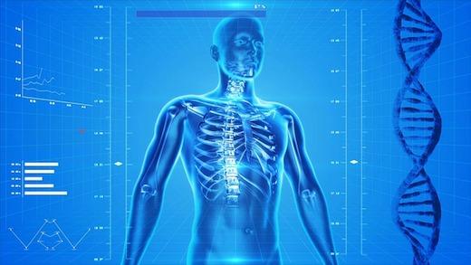 Menselijk skelet, Lichaam, Anatomie