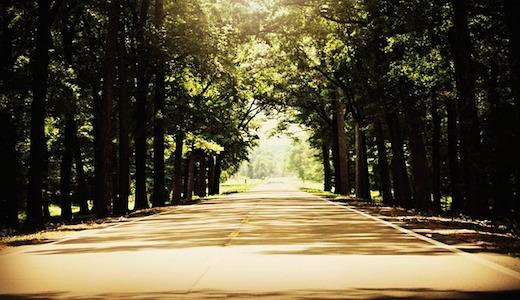 Snelweg, bomen, zon