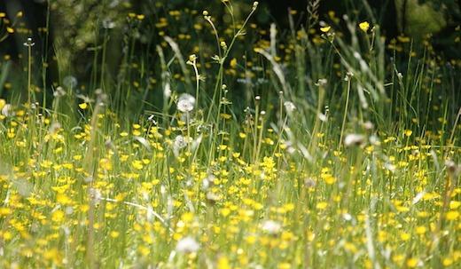 Bloemen, weiland