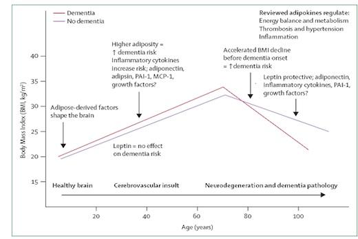 Grafiek BMI leeftijd overgewicht dementie