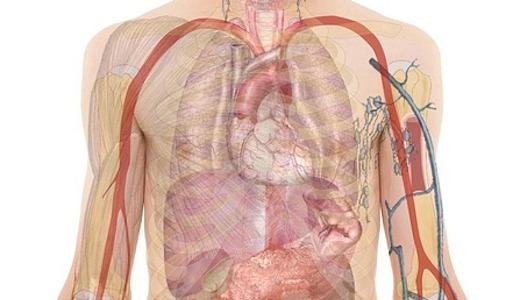 anatomie lichaam man