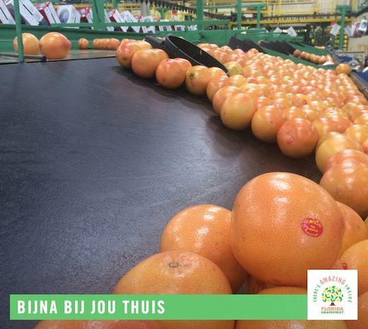 Florida grapefruits, lopende band