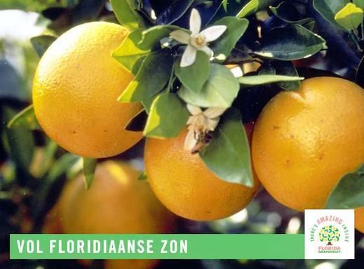 Florida grapefruits