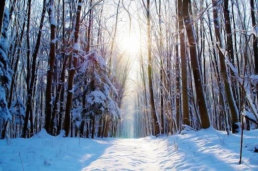 winter bospad sneeuw zon