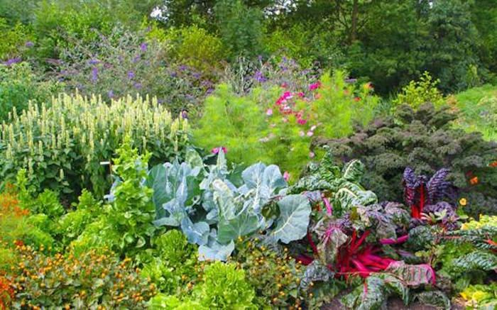Leer zelf een eetbare siertuin maken gezondheidskrant for Tuinontwerp eetbare tuin