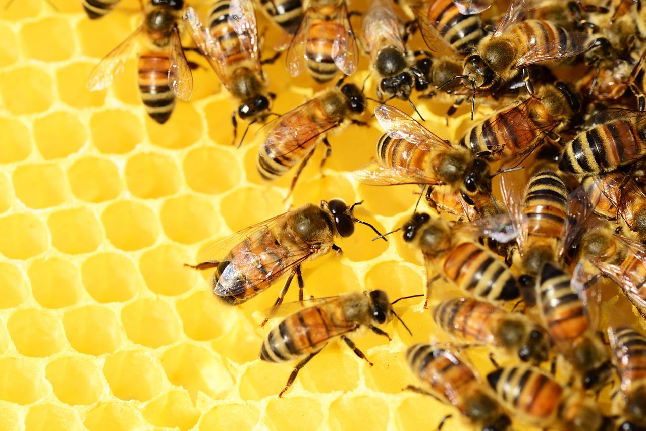 Honingraat bijen