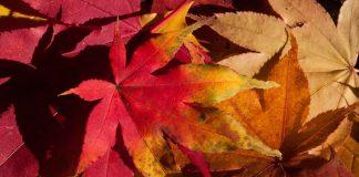 tuintips-herfst