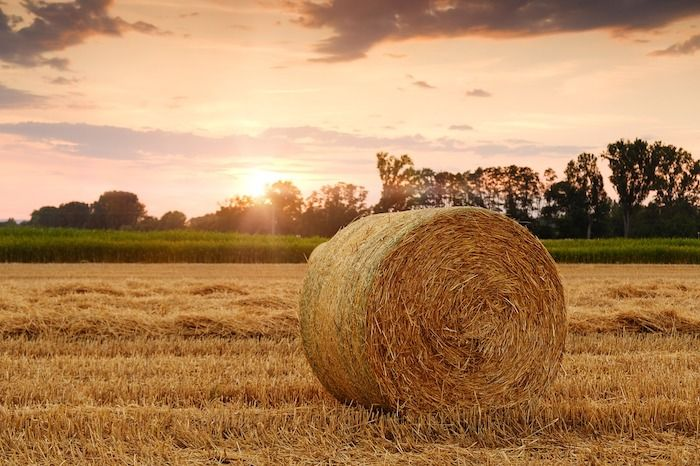 landbouw stro