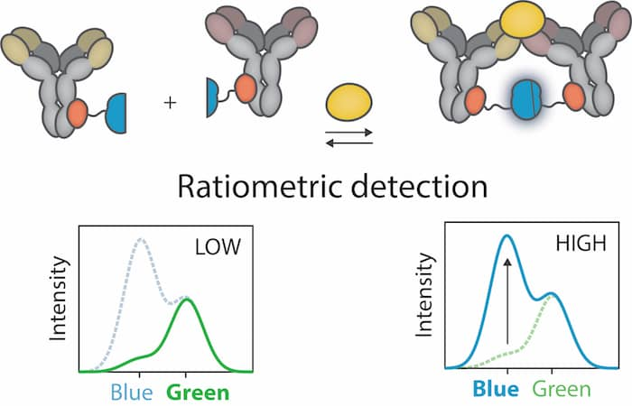 Merkx Ratiometric detection