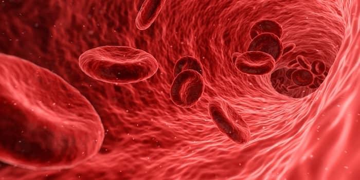 Bloedvat met bloedcellen