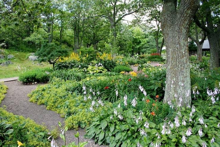 Tuin met bomen en planten